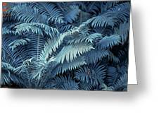 Blue Fern Leaves Abstract. Nature In Alien Skin Greeting Card