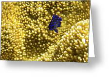 Blue Fish In Coral Greeting Card