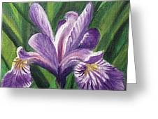 Blue Flag Iris Greeting Card