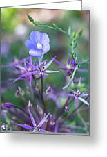 Blue Flax Wildflower With Purple Allium In Foreground Greeting Card