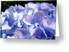 Blue Floral Art Prints Blue Hydrangea Flower Baslee Troutman Greeting Card