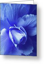 Blue Floral Begonia Greeting Card