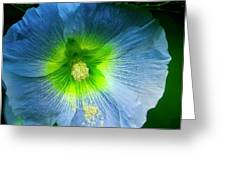 Blue Flower In Morning Sun Greeting Card