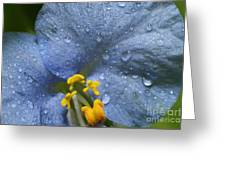 Blue Spring Flower Greeting Card