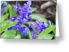Blue Flowers B4 Greeting Card
