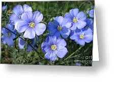 Blue Flowers In The Sun Greeting Card