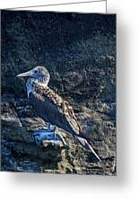 Blue-footed Booby Prize Greeting Card