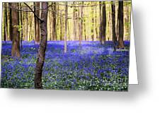 Blue Forest In Shadow Greeting Card