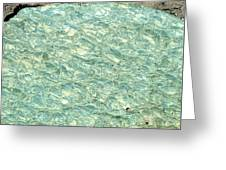 Blue Fossil Greeting Card