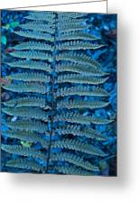 Blue Frond Greeting Card