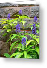 Blue Ginger At The Wall Greeting Card
