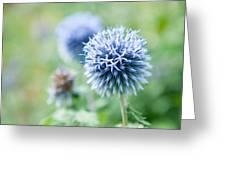 Blue Globe Thistle Flower Greeting Card