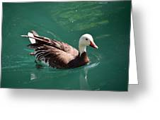 Blue Goose-3 Greeting Card