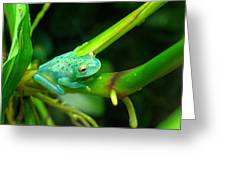 Blue-green Tropical Frog Greeting Card