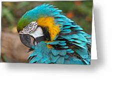 Blue-green-yellow Macaw Greeting Card