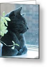 Blue Grey Contemplating Cat Greeting Card