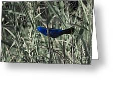 Blue Grosbeak At Rest Greeting Card