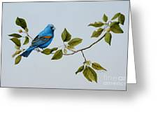 Blue Grosbeak Greeting Card