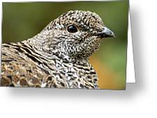 Blue Grouse Hen 2 Greeting Card