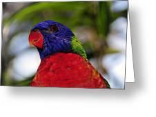 Blue Head Bird Greeting Card