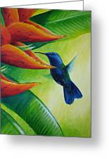 Blue-headed Hummingbird Greeting Card