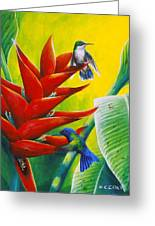 Blue-headed Hummingbirds And Heliconia Greeting Card
