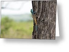 Blue-headed Tree Agama Greeting Card