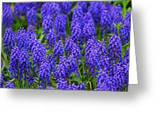 Blue Heads Greeting Card