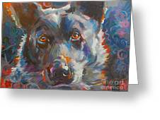 Blue Heeler Greeting Card