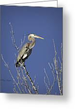 Blue Heron 19 Greeting Card