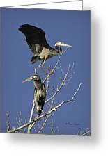 Blue Heron 21 Greeting Card
