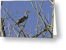 Blue Heron 22 Greeting Card by Roger Snyder