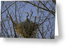 Blue Heron 30 Greeting Card by Roger Snyder
