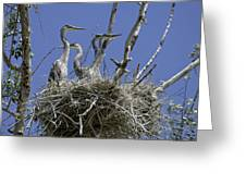 Blue Heron 36 Greeting Card by Roger Snyder