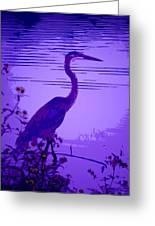 Blue Heron... Greeting Card