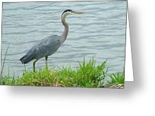 Blue Heron By The Lake Greeting Card