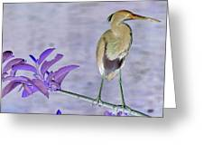 Blue Heron Colorized Greeting Card