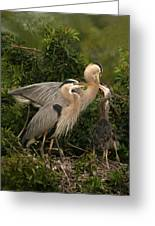 Blue Heron Family Greeting Card
