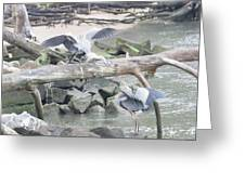 Blue Heron Fight Greeting Card