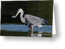 Blue Heron - Fish By The Tail Greeting Card
