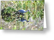 Blue Heron Fishing In A Pond In Bright Daylight Greeting Card
