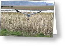 Blue Heron Flight Greeting Card