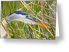 Blue Heron Hunting Greeting Card