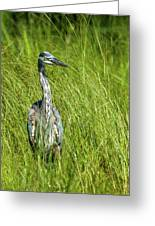 Blue Heron In A Marsh Greeting Card