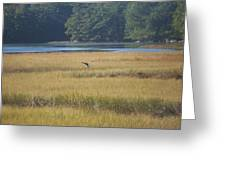 Blue Heron ...in Flight Greeting Card