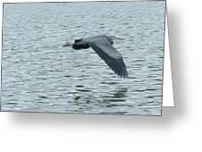 Blue Heron In Flight Greeting Card