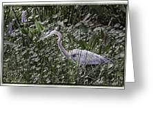 Blue Heron In Grass 4566 Greeting Card