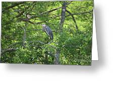 Blue Heron In Green Tree Greeting Card