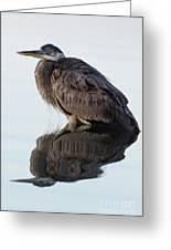 Blue Heron In Reflection, St. Marks Wildlife Refuge, Florida Greeting Card