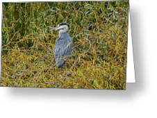Blue Heron In The Autumn Colours Greeting Card